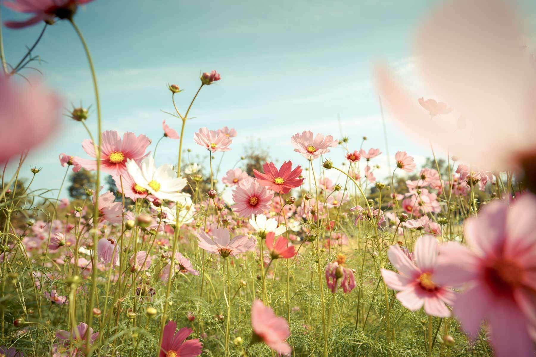 champs fleurs