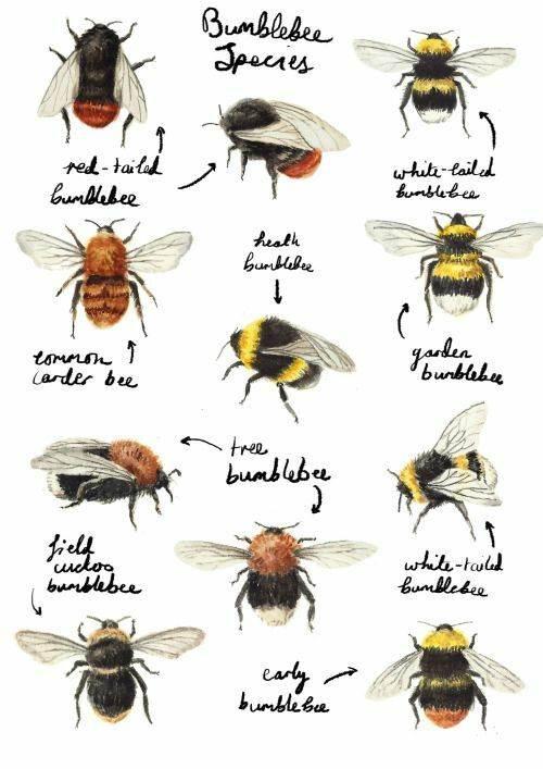 la journée des abeilles