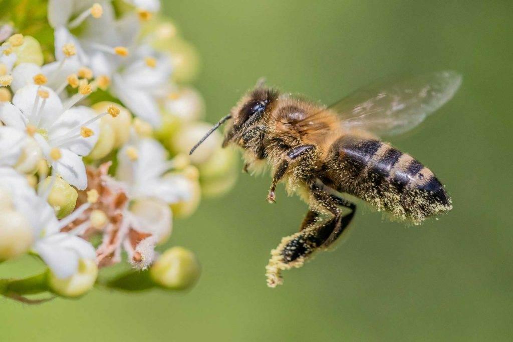 sauvons-abeilles-insectes-pollinisateurs